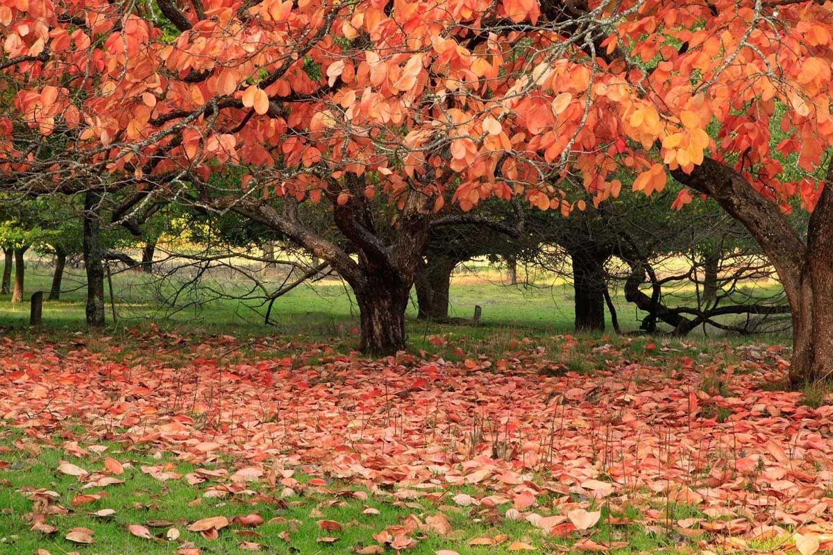 Công viên cây Golden Valley, Balingup, WA