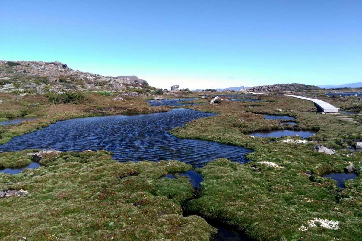 Công viên quốc gia Mount Field, TAS